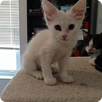 Adopt A Pet :: Casper - El Paso, TX