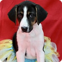 Adopt A Pet :: Sabra - Picayune, MS