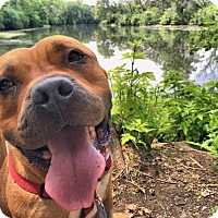 Adopt A Pet :: Simba - Lowell, IN