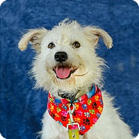 Adopt A Pet :: Cassidy - Vancouver, BC