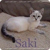 Adopt A Pet :: Saki - Garner, NC