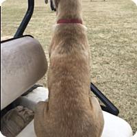 Adopt A Pet :: Harley - Brattleboro, VT