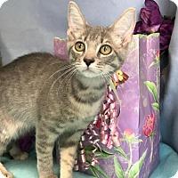 Adopt A Pet :: Sweetie - Oviedo, FL