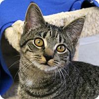 Adopt A Pet :: Doc VALENTINE'S SPECIAL! 50% O - Republic, WA