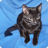 Adopt A Pet :: K-Meadows2-Tina - Colorado Springs, CO