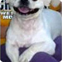 Adopt A Pet :: Snowflake-VA - Mays Landing, NJ