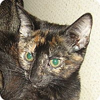 Adopt A Pet :: FIONA-2012 - Hamilton, NJ