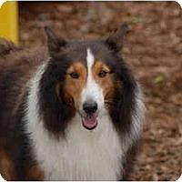 Adopt A Pet :: Rusty - Ft. Myers, FL