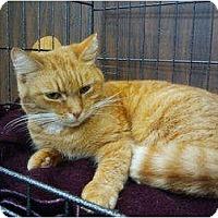 Adopt A Pet :: Petey 2 (AN) - Little Falls, NJ