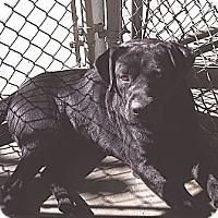 Adopt A Pet :: Kenny - Alexandria, VA