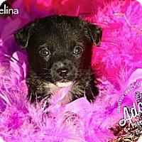 Adopt A Pet :: Thumbelina - Albany, NY