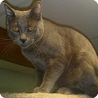 Adopt A Pet :: Oscar - Hamburg, NY