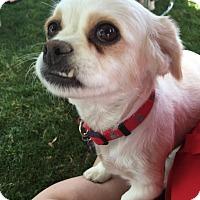 Adopt A Pet :: Loretta Lynn - La Quinta, CA