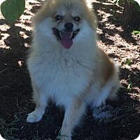 Adopt A Pet :: Stephania-Pending adoption - Manchester, CT