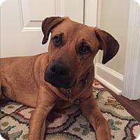 Adopt A Pet :: Guest Dog - Bentley - Decatur, GA