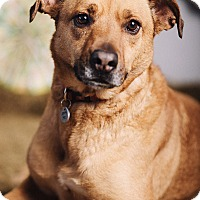 Adopt A Pet :: Smiley - Portland, OR