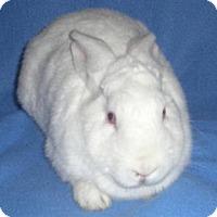 Adopt A Pet :: Abigail - Woburn, MA