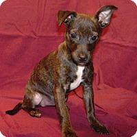 Adopt A Pet :: 16-d05-018 Harmony - Fayetteville, TN