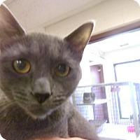 Adopt A Pet :: Jill - Muscatine, IA