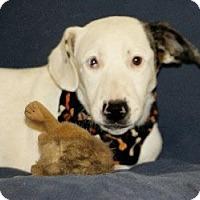 Adopt A Pet :: Tac - Avon, NY