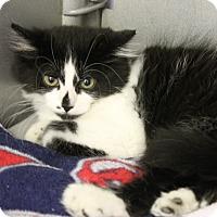 Adopt A Pet :: Ava - Medina, OH