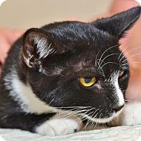 Adopt A Pet :: Spritz - Davis, CA