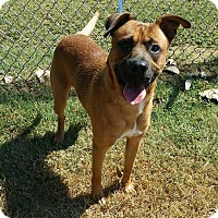 Adopt A Pet :: Roscoe - Cannelton, IN