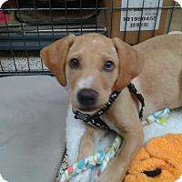 Adopt A Pet :: Christof - Thousand Oaks, CA