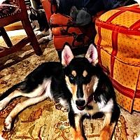 Adopt A Pet :: Natasha - Chandler, AZ