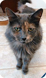 Domestic Mediumhair Cat for adoption in Cloquet, Minnesota - Alexa