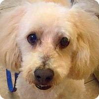 Adopt A Pet :: Murphy - St. George, UT