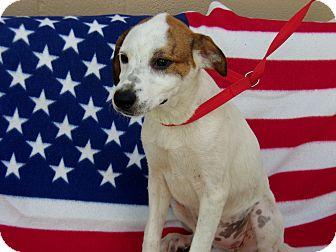 Great Pyrenees/Labrador Retriever Mix Puppy for adoption in Jacksonville, Texas - Sasha