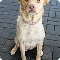 Adopt A Pet :: Vanilla - Jacksonville, NC