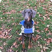 Adopt A Pet :: Kerry - Columbus, OH