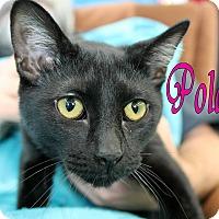 Adopt A Pet :: Polaris - Wichita Falls, TX