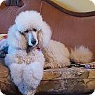 Adopt A Pet :: Winston 2