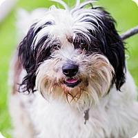 Adopt A Pet :: Kramer - San Diego, CA