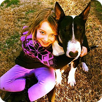 Bull Terrier Dog for adoption in Sachse, Texas - Lenard aka Spike