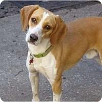Adopt A Pet :: Grover - Palm Bay, FL