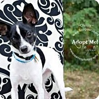 Adopt A Pet :: Chrissy - Shawnee Mission, KS
