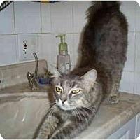 Adopt A Pet :: MANDY (PO) - Little Falls, NJ