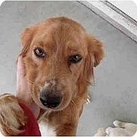Adopt A Pet :: Angelica - Cumming, GA
