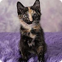 Adopt A Pet :: Willow - Eagan, MN