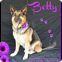 Adopt A Pet :: Betty - Plano, TX