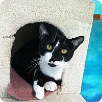 Adopt A Pet :: Pretty Boy - Newport Beach, CA