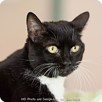 Adopt A Pet :: Scarlett - Fountain Hills, AZ