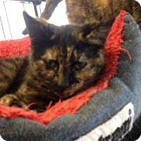 Adopt A Pet :: Rosie - Caistor Centre, ON