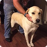 Adopt A Pet :: Aries - Odessa, TX