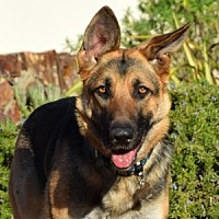 Adopt A Pet :: Teagan - San Diego, CA