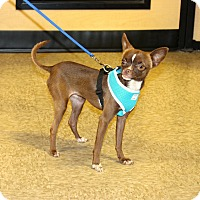 Adopt A Pet :: Lily - Yuba City, CA